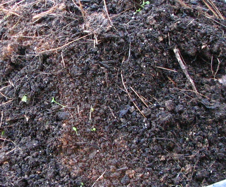 How to make great compost a garden must old world for Soil king compost