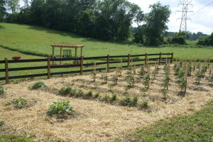We use only straw, leaf and compost mulch in the garden