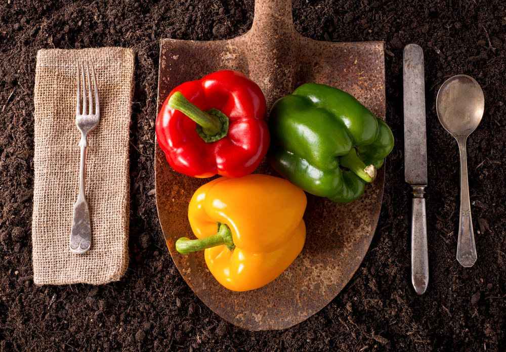 What's In Your Food?  Grow It – And You'll Know It!