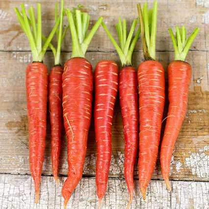 The Atomic Red Carrots - Photo courtesy of Baker Creek Seeds