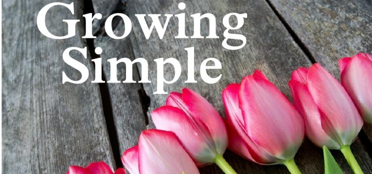The Growing Simple Book – The Dream Is Finalized!