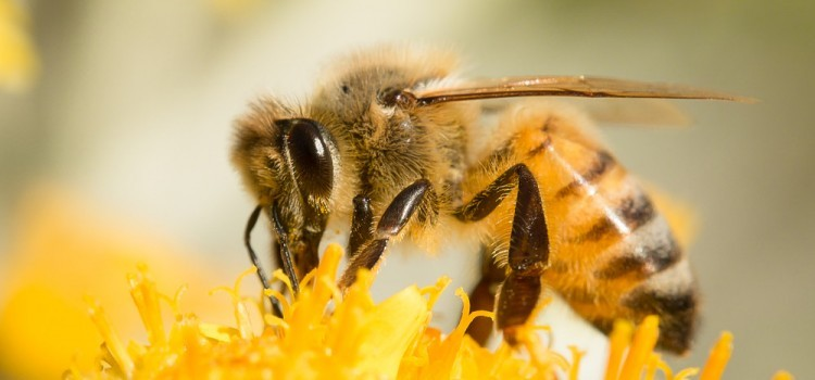 5 Amazing Facts About Honey Bees