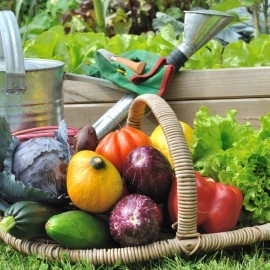 7 Quick Garden Tips To Keep Your Garden Beautiful This Summer!