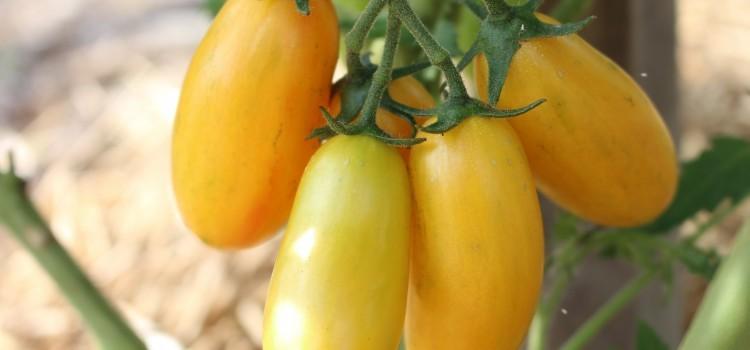 4 Big Winning Plant Varieties From Our 2016 Garden Trials