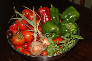 Fresh picked in the morning - a bowl of pasta sauce waiting to be made!