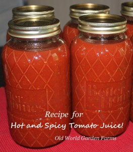 spicy tomato juice