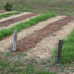 Tips on Growing Cover Crops