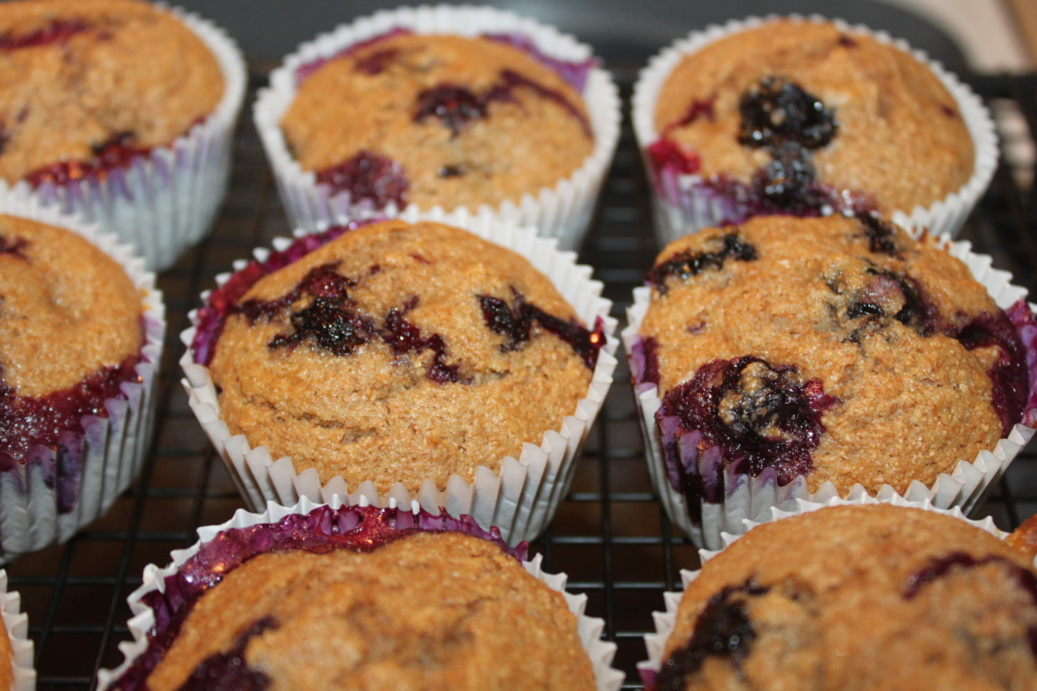 Whole Wheat Blueberry Muffin Recipe  – Get Ready For Blueberry Season!
