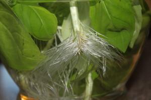 preserve basil