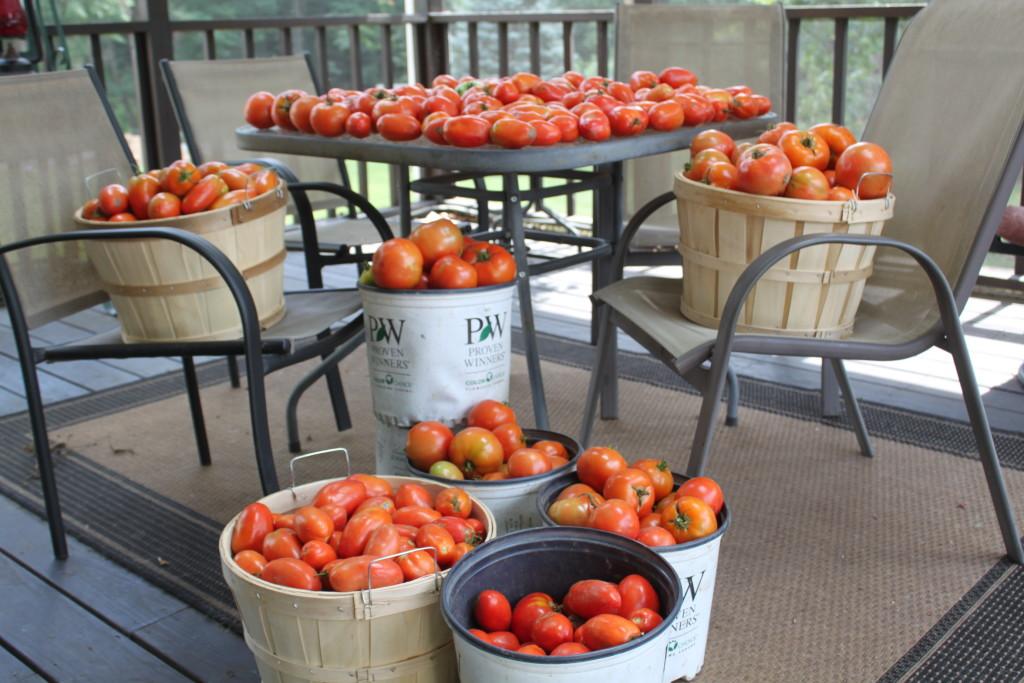 best tomato crop