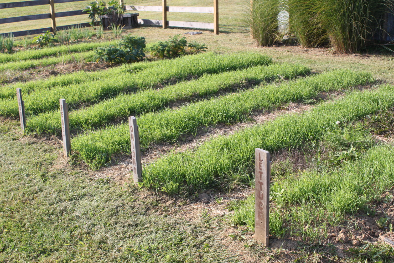 How to plant a green manure crop this spring for a great - Cover crops for vegetable gardens ...