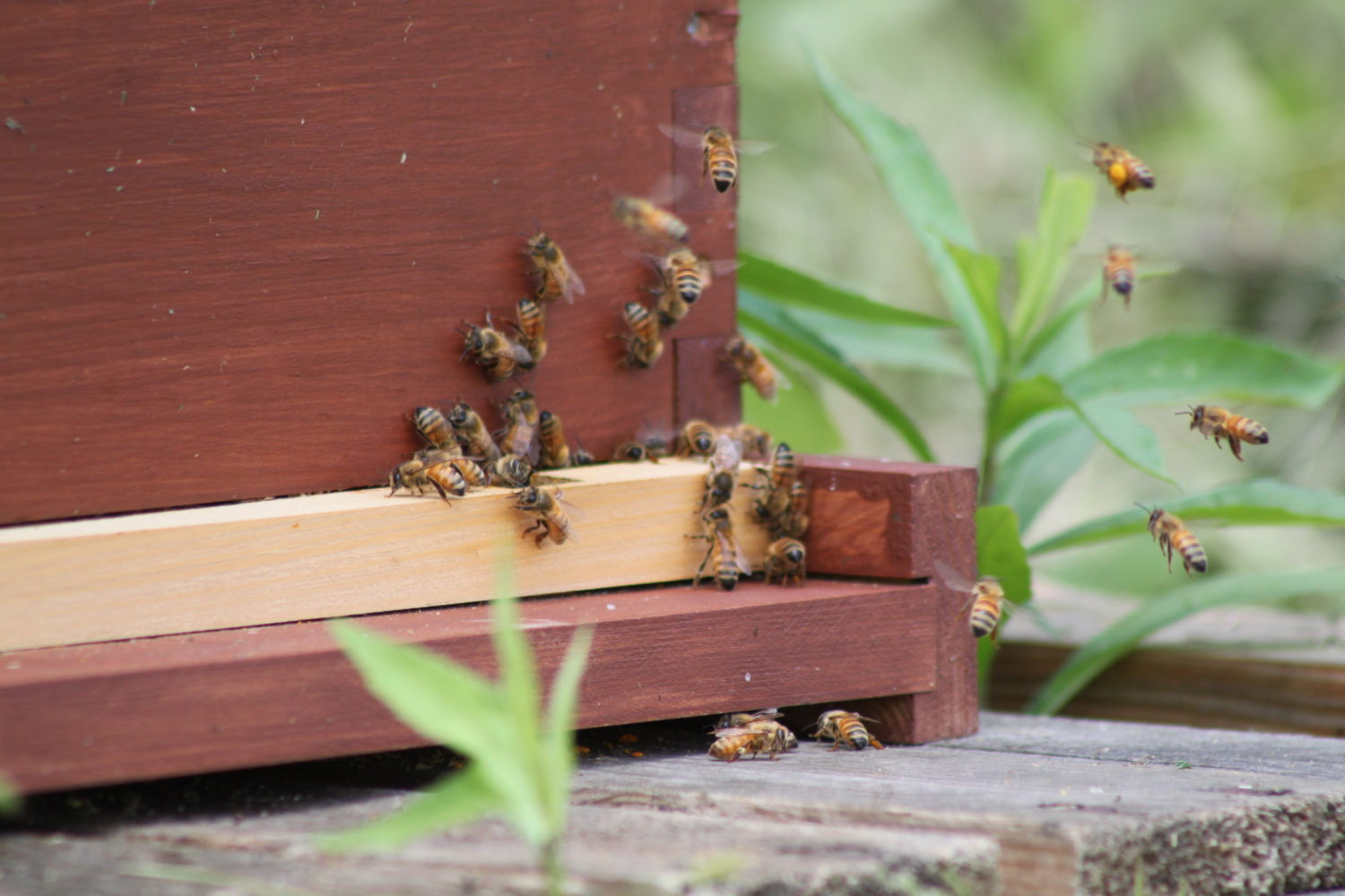 Taking Care Of Our Honeybees In The Winter