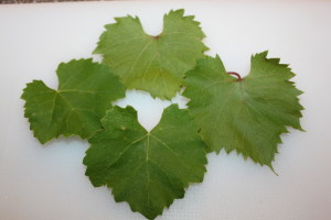 Grape leaves from our vineyard will be used to make our pickles crisp.