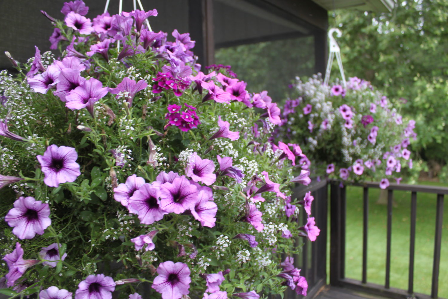 Keeping Potted Plants And Hanging Baskets Beautiful All Summer Long