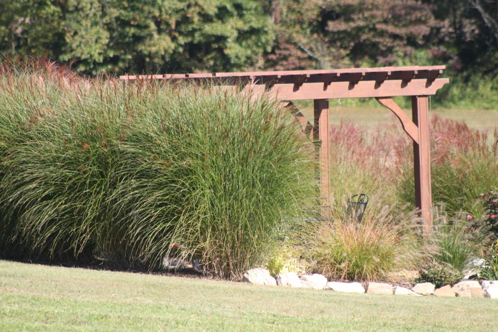 grasses in landscape
