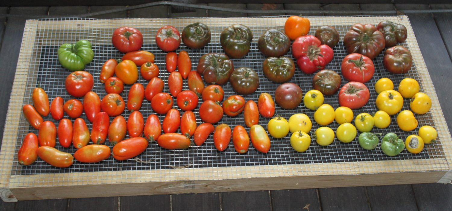 Tomatoes The Best Tomato Varieties To Grow For Eating Cooking