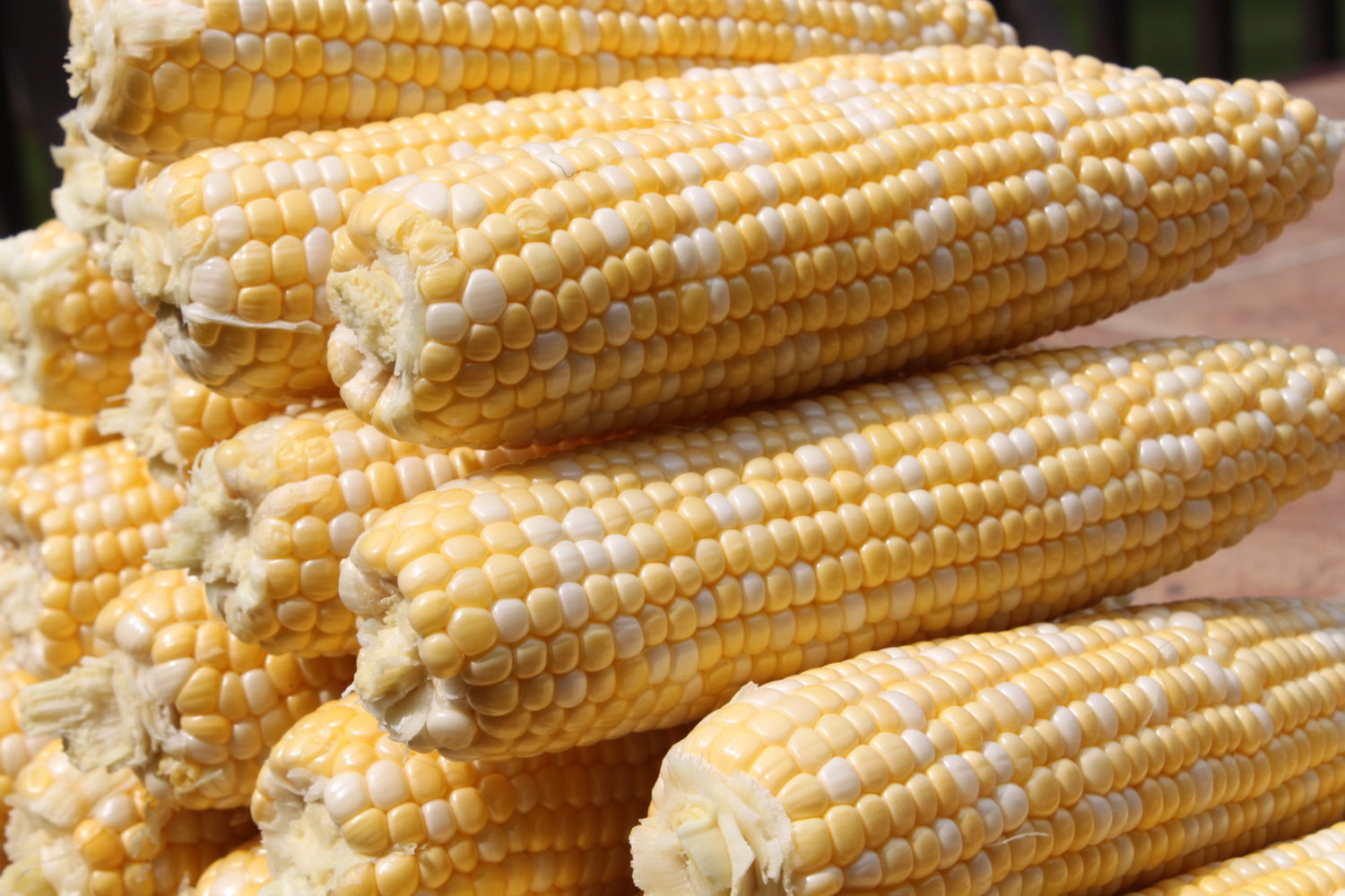 Preserving Corn – How To Freeze or Can Corn From The Garden