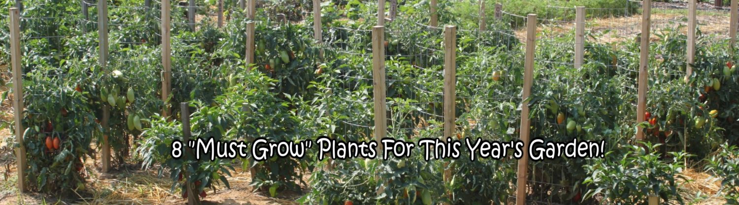 "8 ""Must Grow"" Plants For This Year's Garden!"