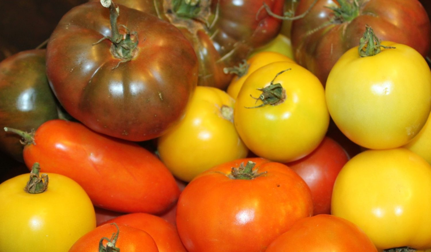 10 Amazing Tomato To Grow This Year – Heirloom Tomatoes Rock!