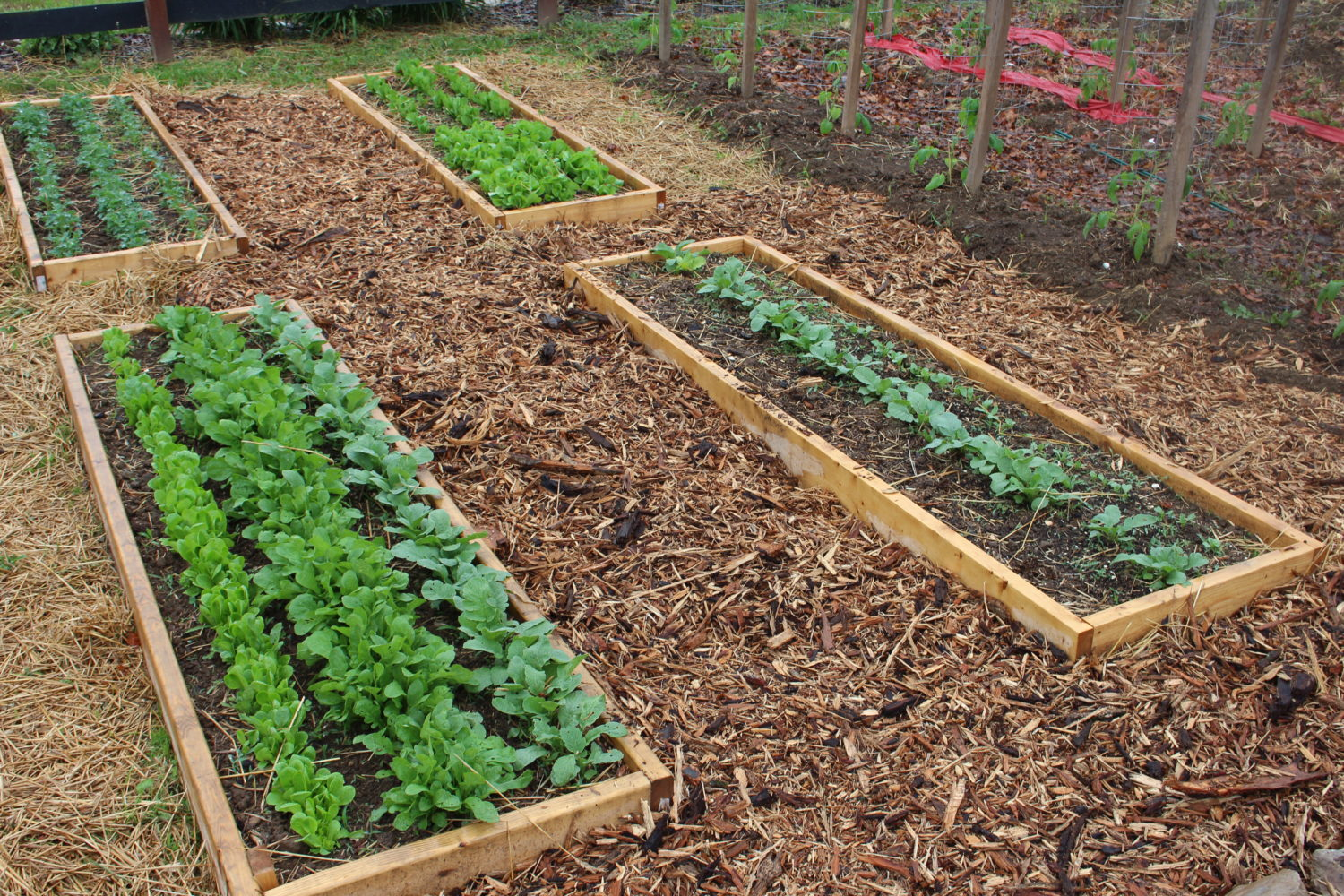 The 2015 Garden Is Planted! And A Few Garden Experiments Come To Life…