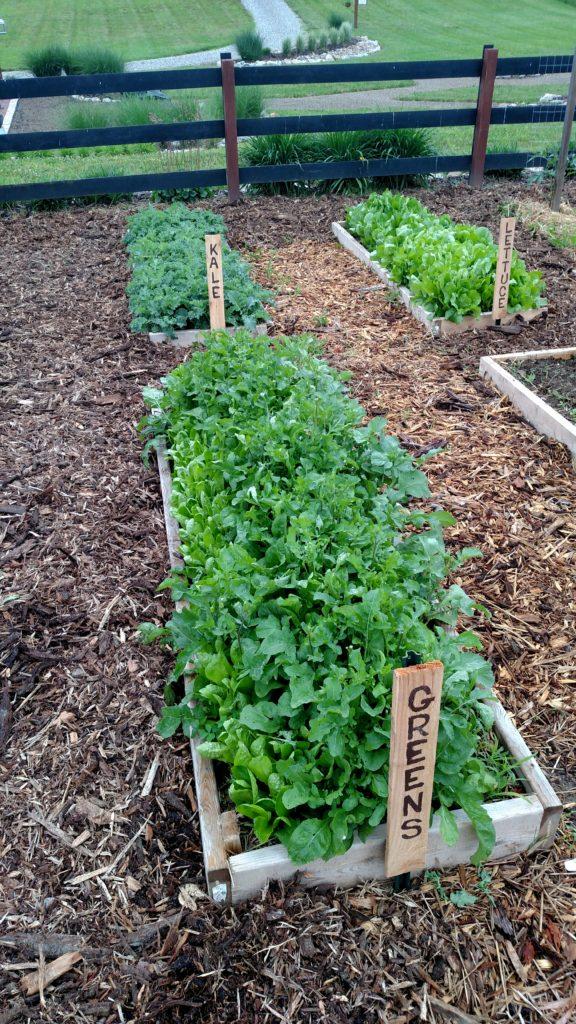 The 3 Secrets To A Weed Free Garden Old World Garden Farms