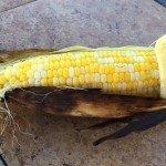 grill sweet corn