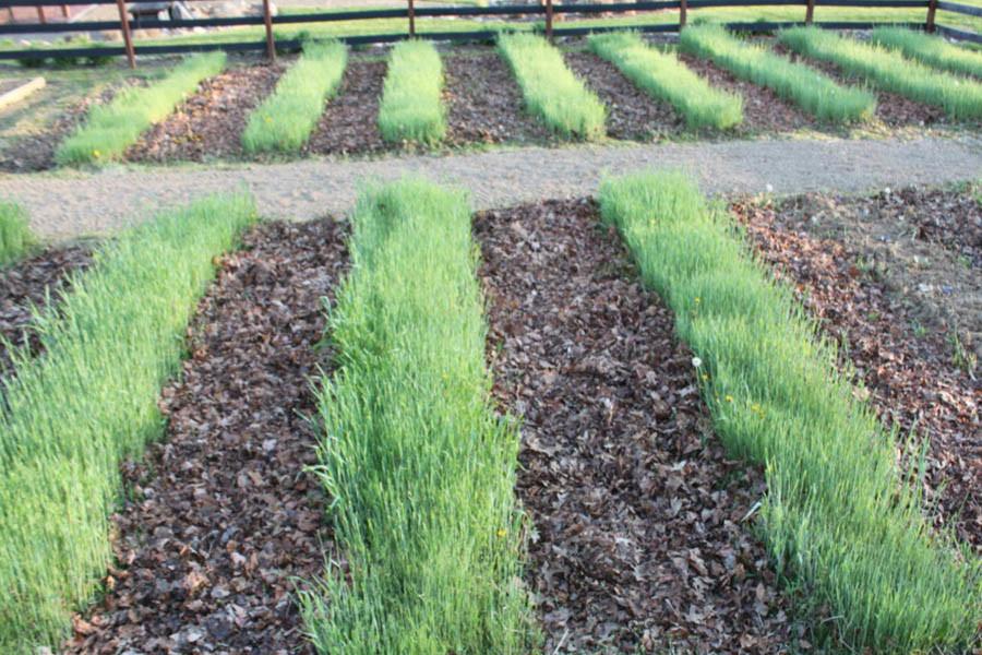 big garden experiment