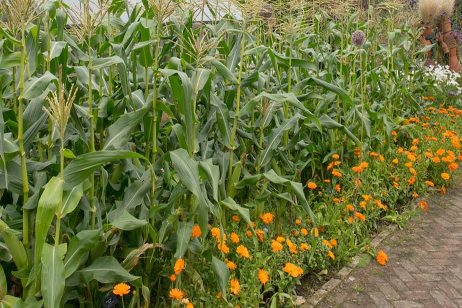 Companion Plants In The Garden What You Plant Where Matters