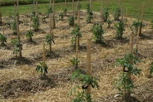 eliminating weeds