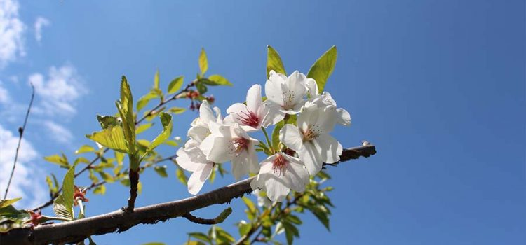 early spring photos