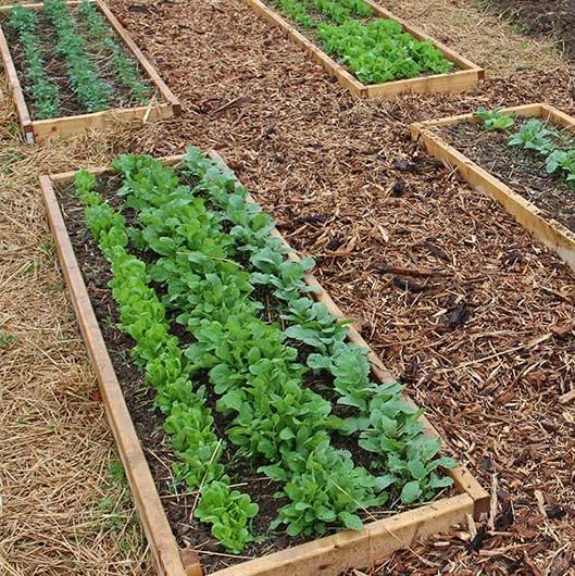 2019 garden plan