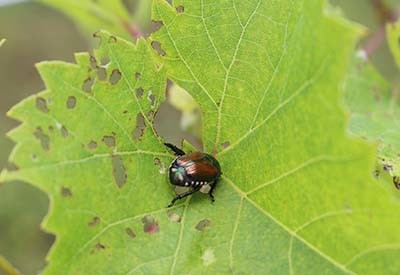 summer garden pests