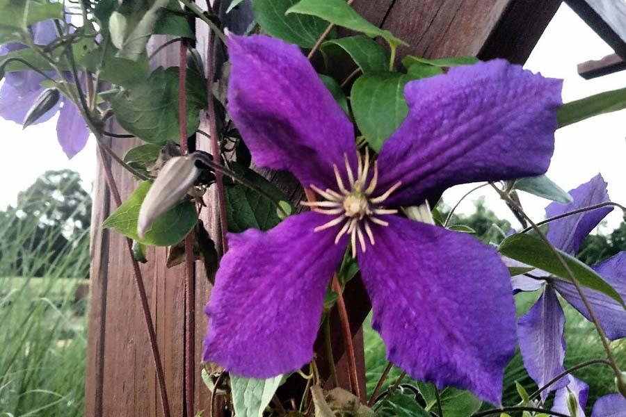 garden photo update