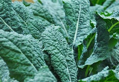 summer vegetable garden