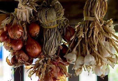 planting fall garlic and onions