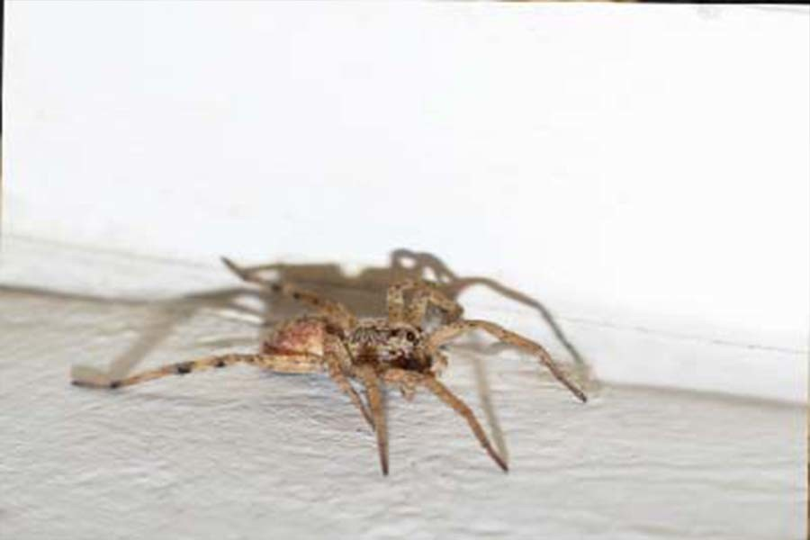 natural methods to deter spiders