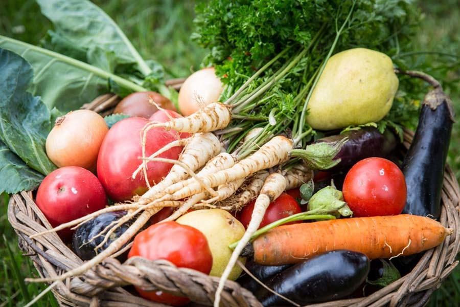 top 5 vegetable plants