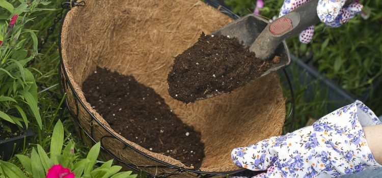 perfect potting soil