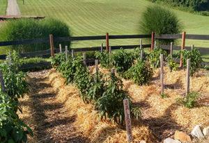no-till garden cover crops