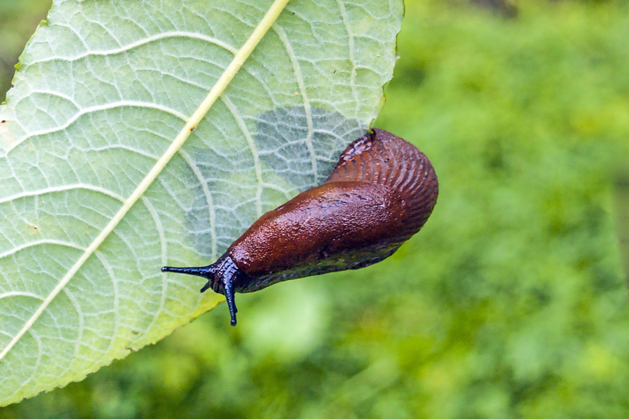 6 Natural Ways To Stop Slugs How To Keep Plants Safe