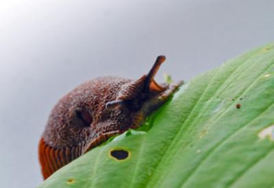 stop slugs