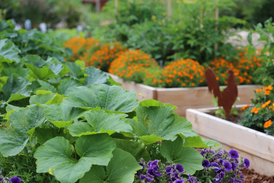 5 secrets to fertilizing vegetable plants and flowers - When to fertilize vegetable garden ...