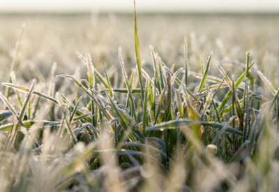 cover crop guide