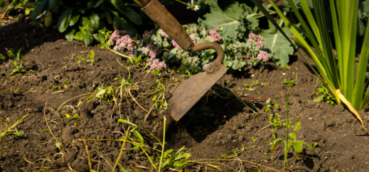 The 2 Big Secrets To Eliminate Garden Weeds and Weeding Chores Forever!