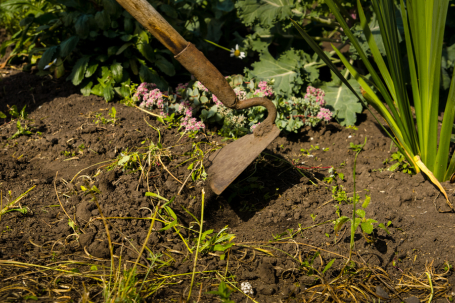 eliminate garden weeds