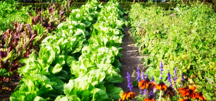 The Big Garden Experiment – Taking Companion Planting To A New Level!