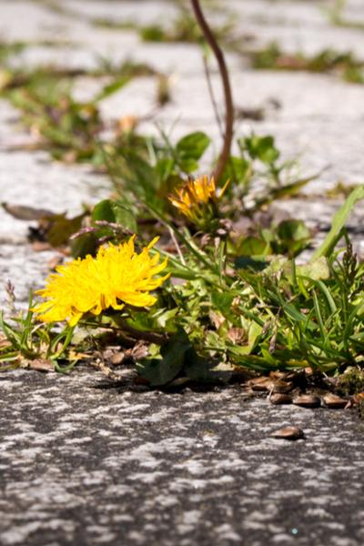 stop weeds
