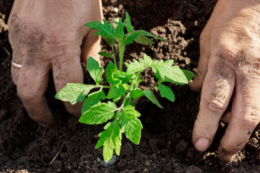 vegetable garden planting guide