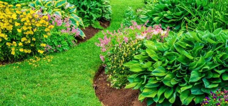 flowerbeds weed free