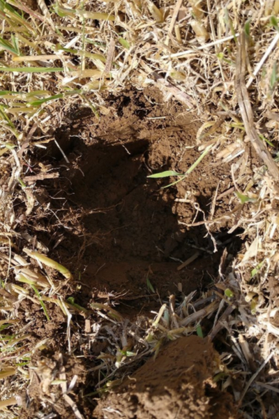 planting hole created by a post hole digger